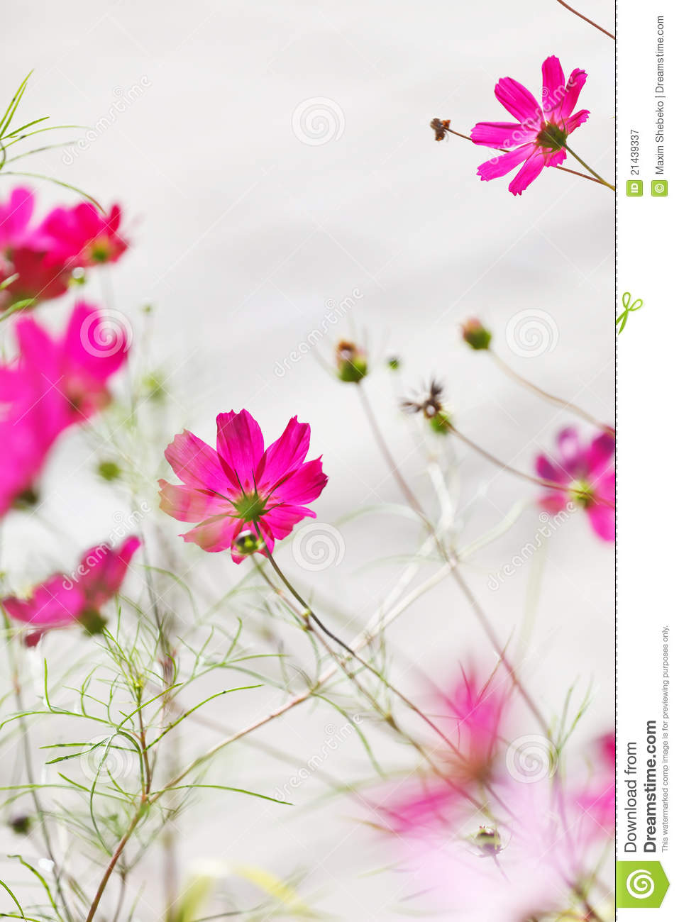 nice flowers royalty free stock photography  image, Natural flower