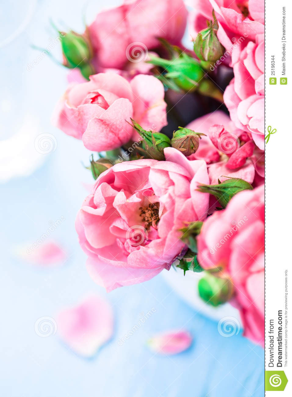 nice flowers stock images  image, Beautiful flower