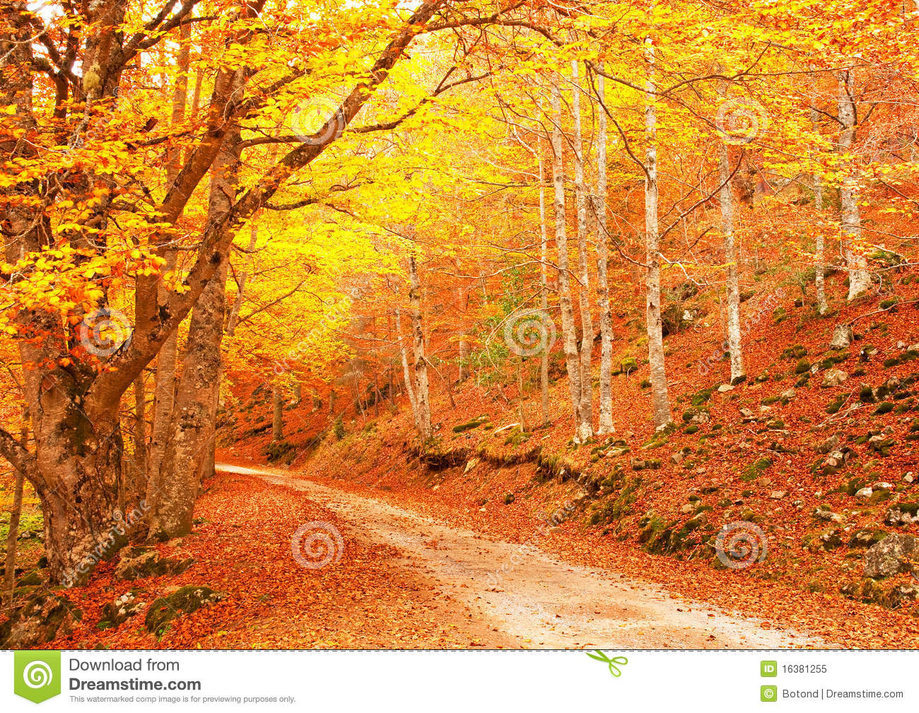 Nice Forest In Autumn Stock Image. Image Of Path, Beauty