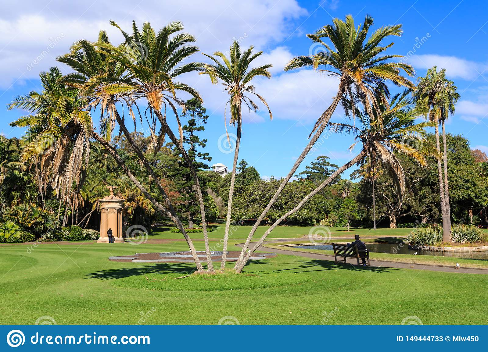 Palm Trees In Royal Botanic Garden Sydney Australia Stock Image