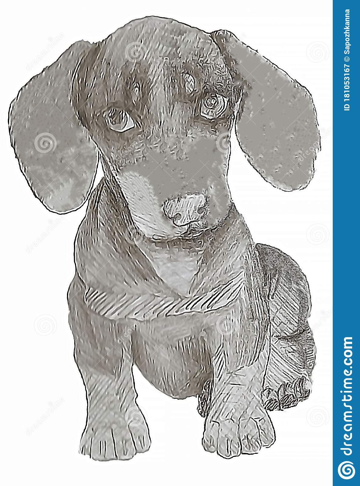 Nice Little Little Dachshund Puppy The Technique Is A Classic Drawing Stock Illustration Illustration Of Mountain Overlay 181053167