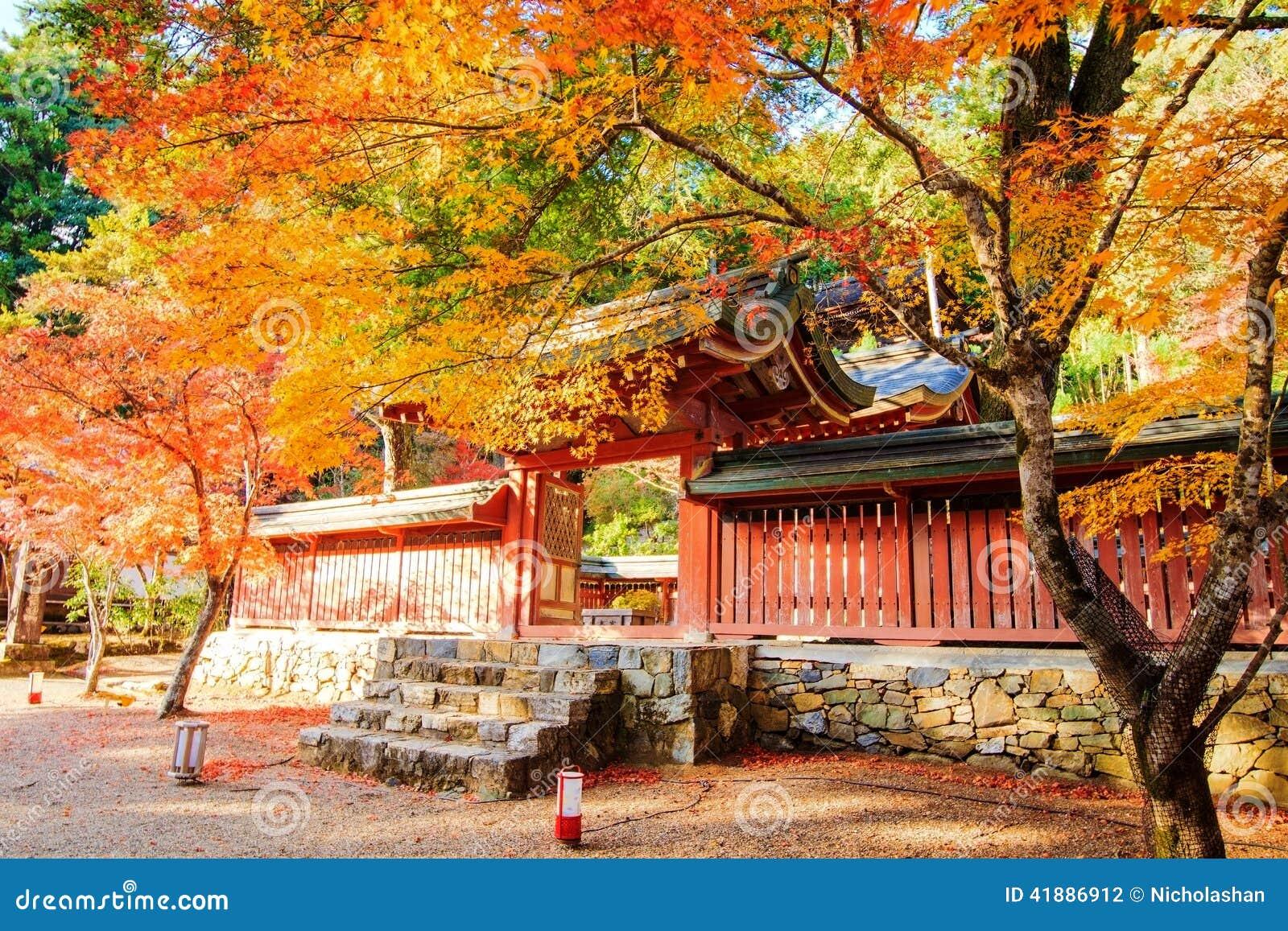 Nice Maple Season Japan Stock Photo Image 41886912