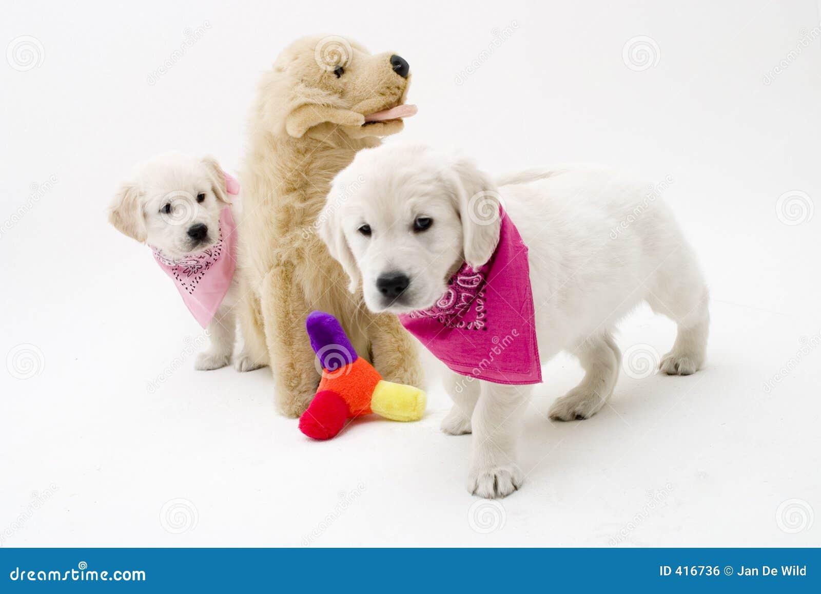 nice puppies - Imgur