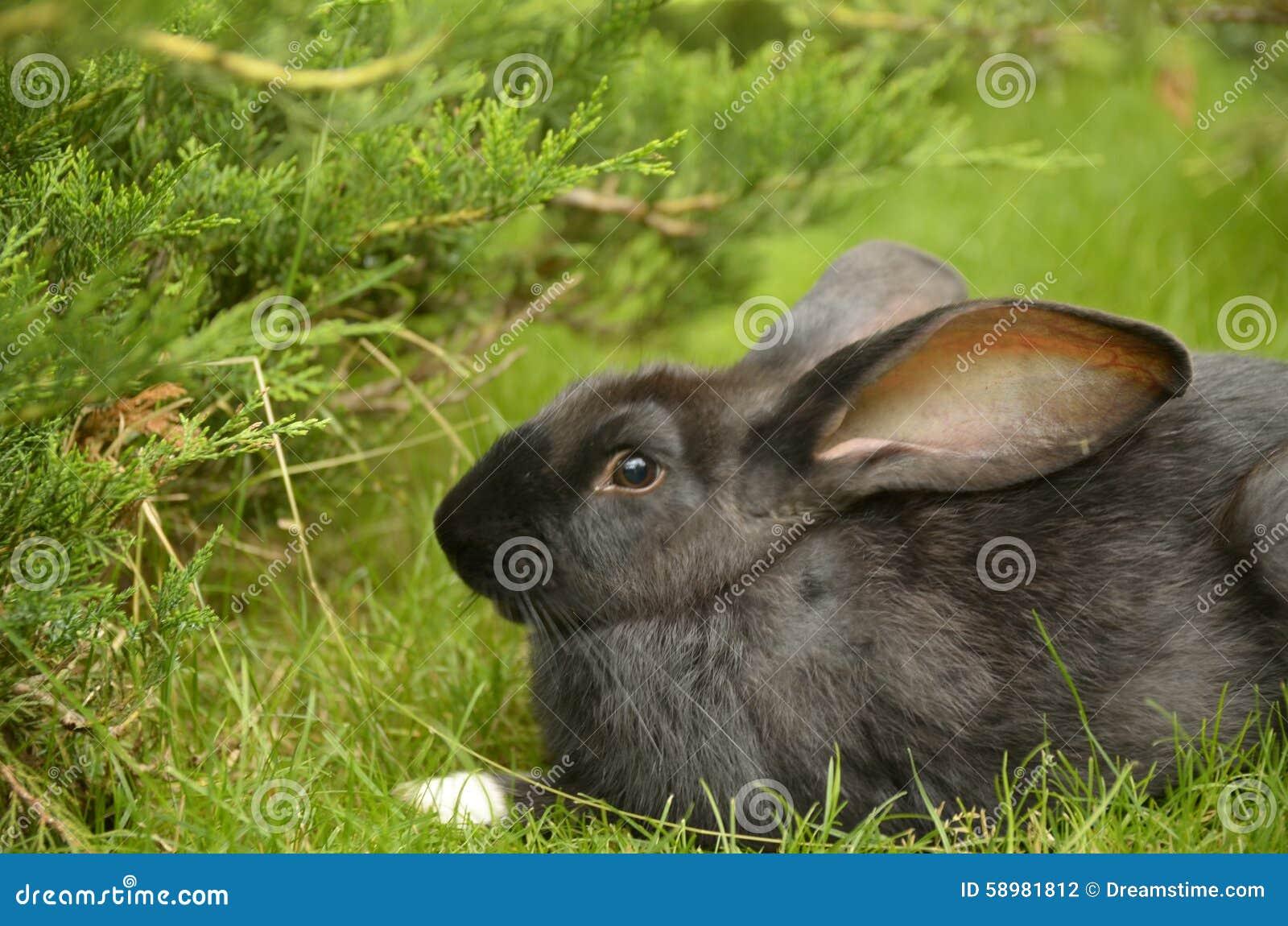 Nice rabbit stock photo image 58981812