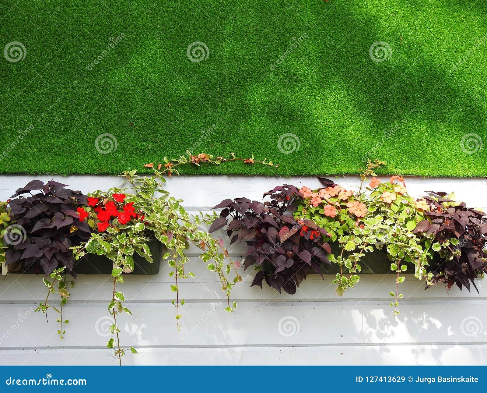 Beautiful flowers near home wall, Lithuania