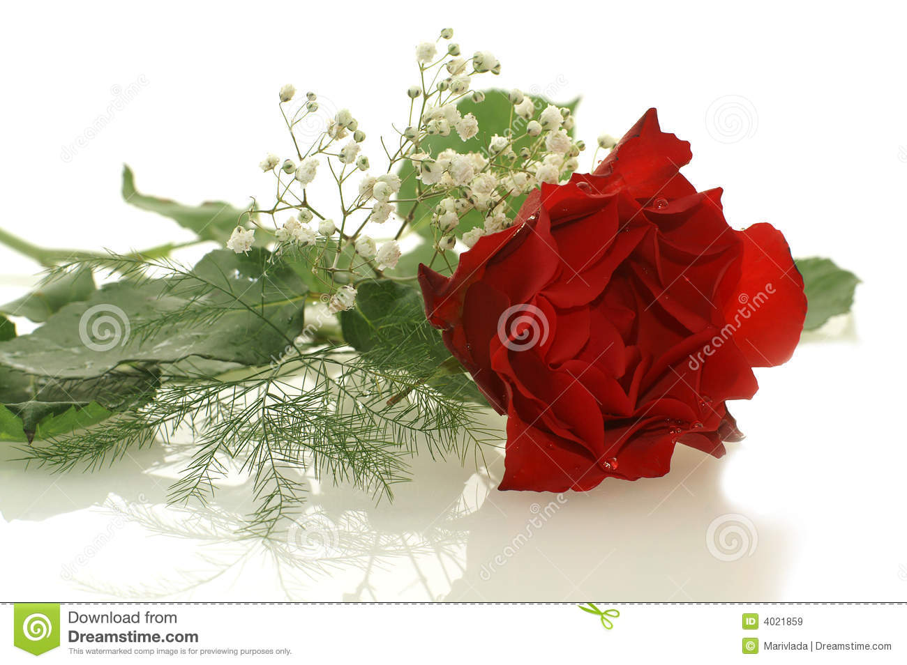 Nice Red Rose With A Little White Flowers Royalty Free
