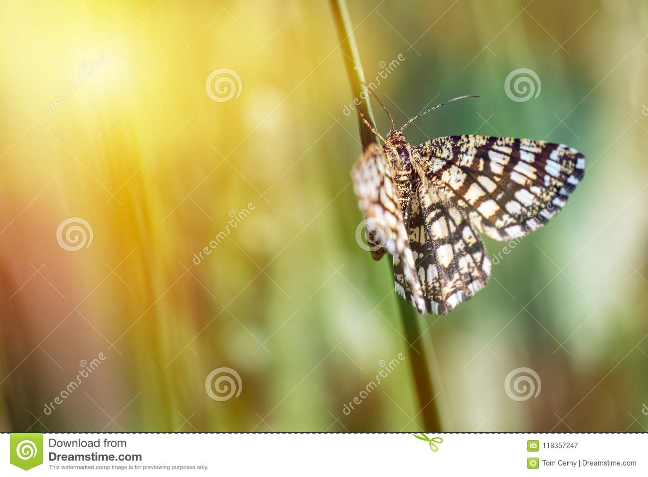 Nice small butterfly sitting on stem of grass, colored photo