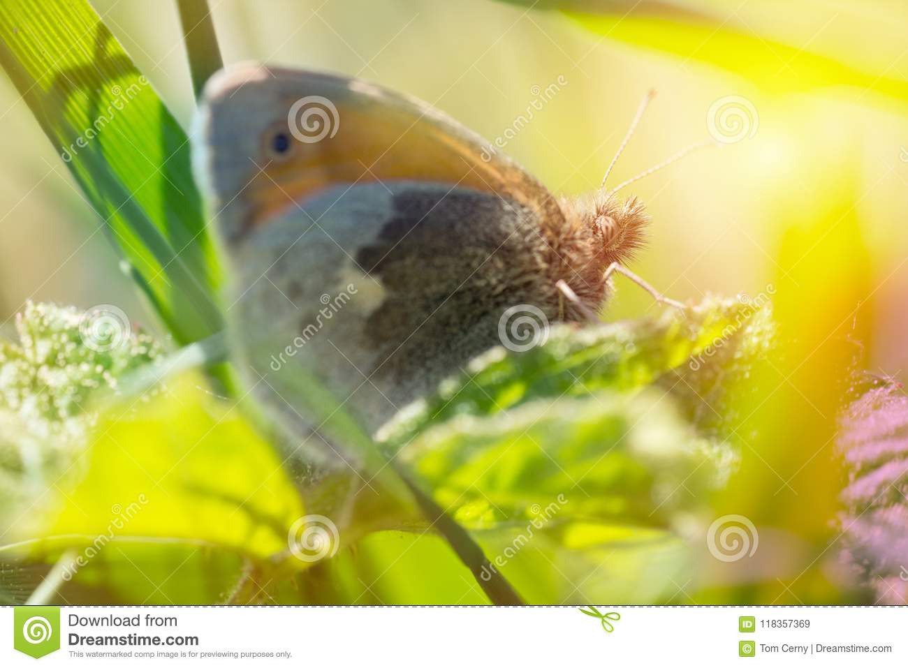Nice small orange butterfly sitting on grass, colored photo