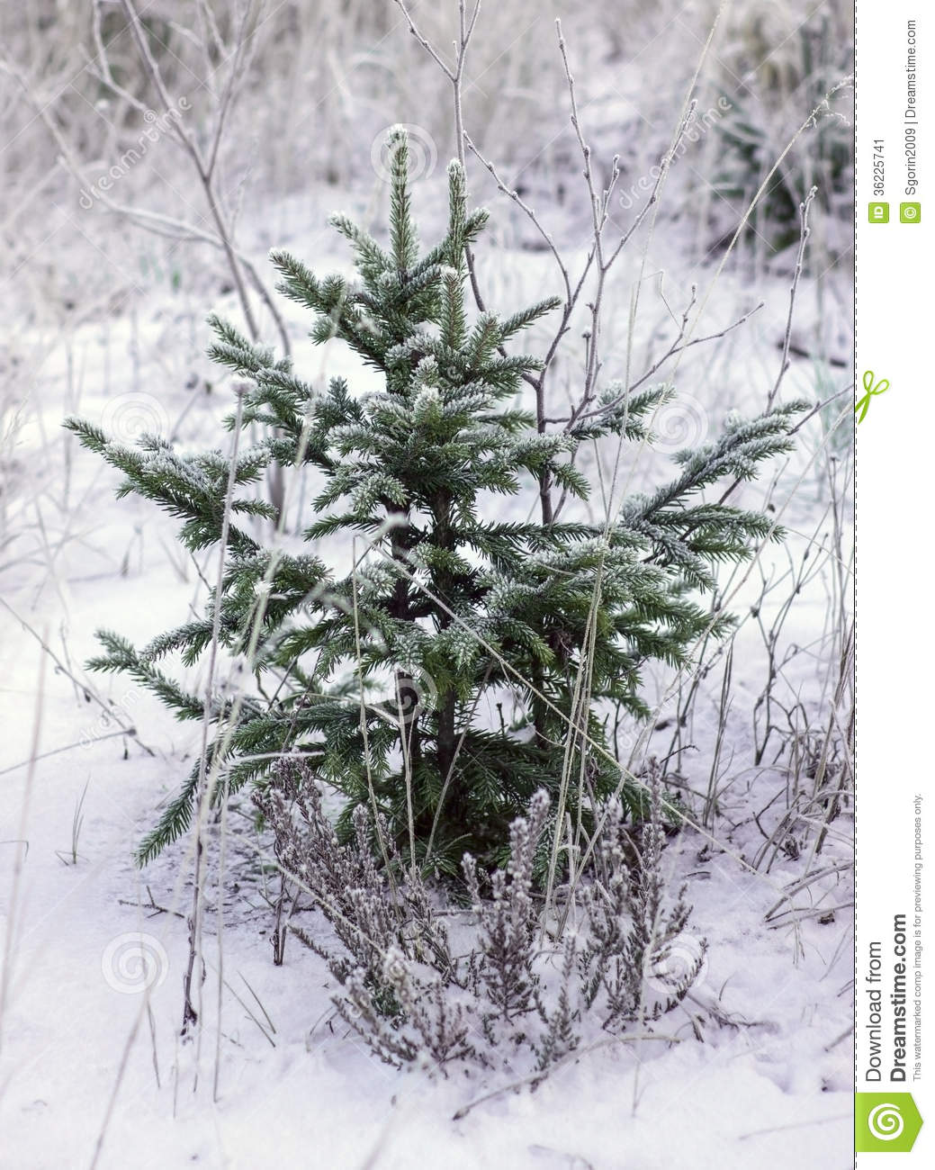 Nice small winter fir tree stock image image 36225741 for Nice small trees