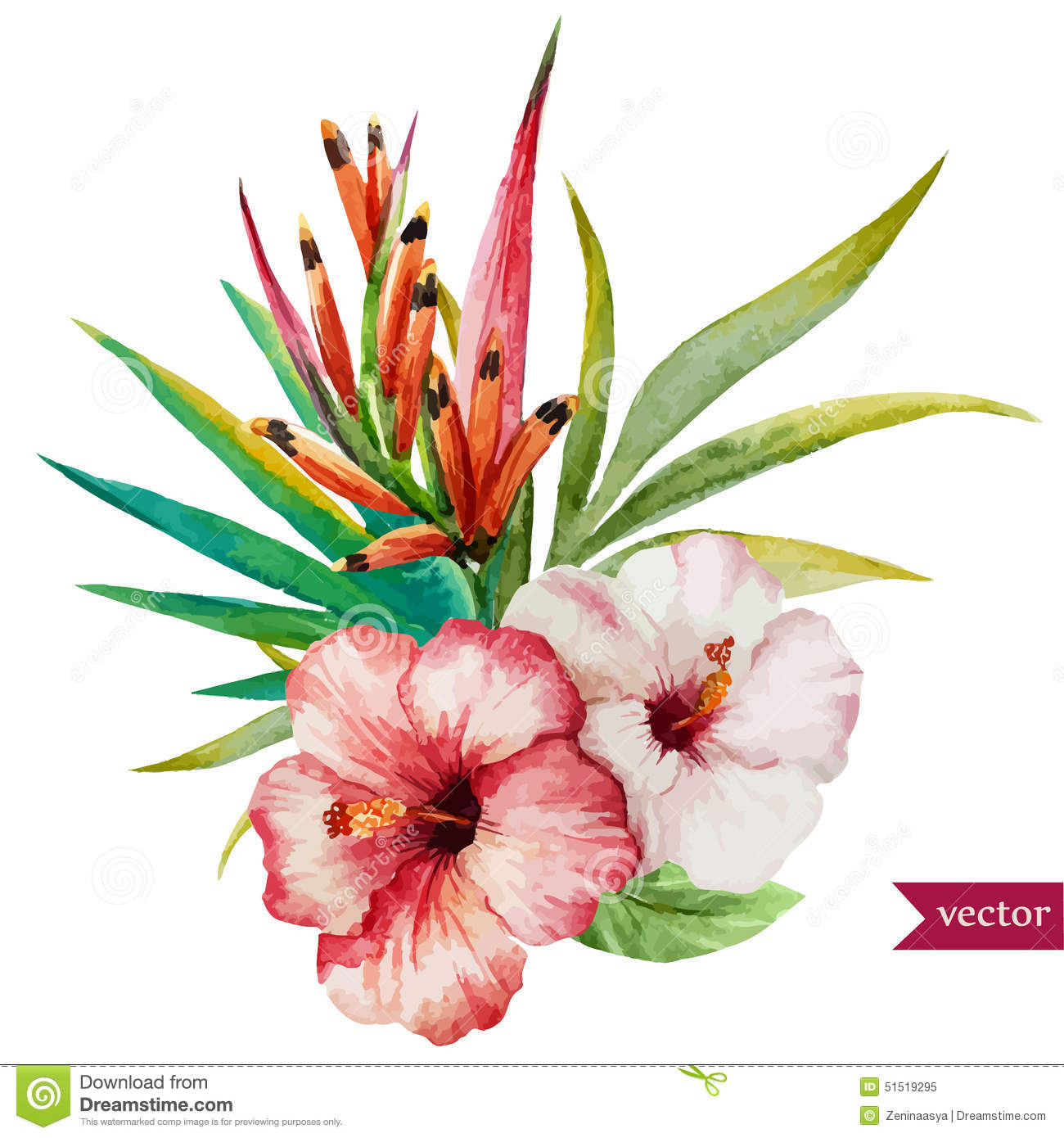 Nice Tropical Flowers Stock Vector Image Of Design