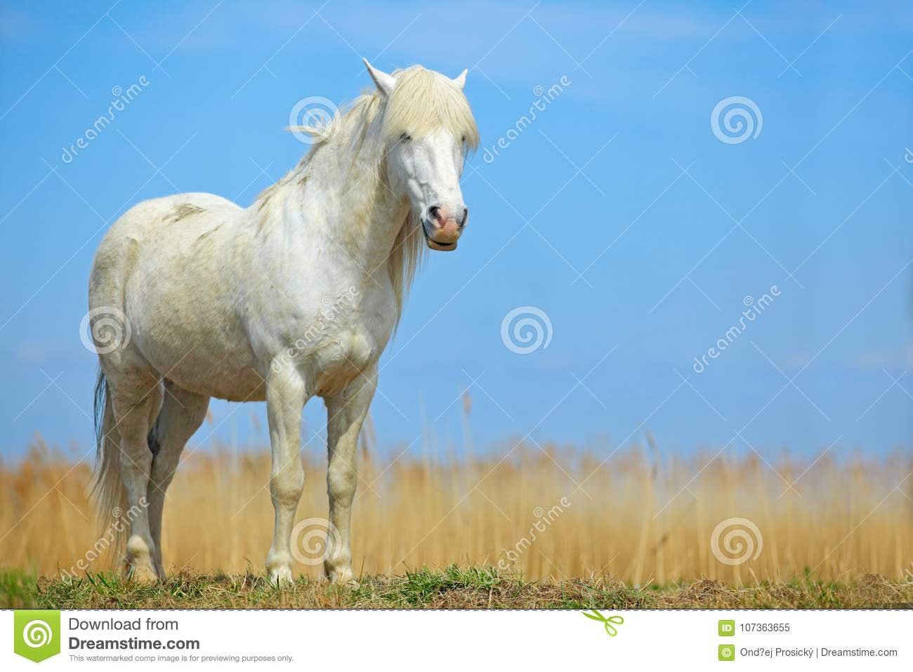 Nice White Horse On The Meadow. Horse With Dark Blue Sky