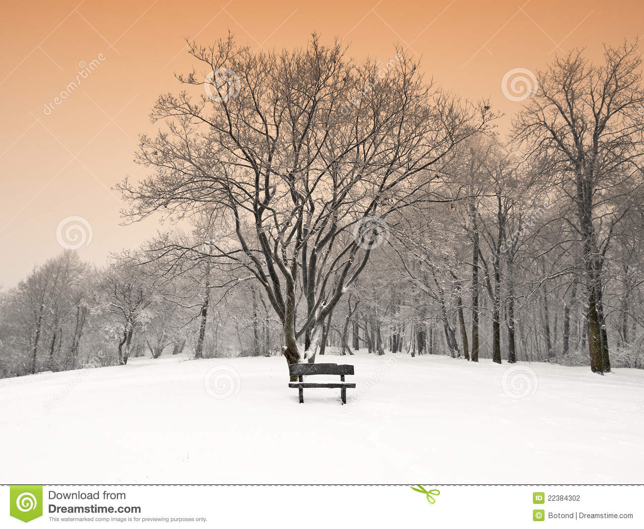 Nice Winter Scene Stock Photo. Image Of Harmony, Natural