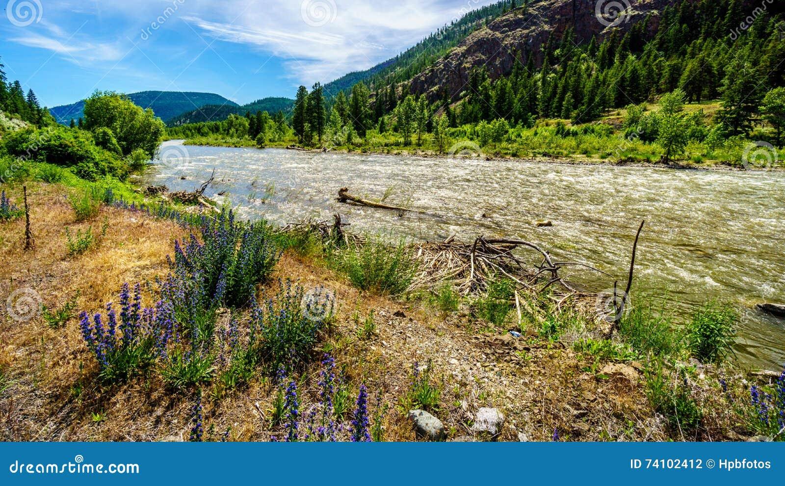 Nicola河,它流动到沿高速公路8的弗拉塞尔河从梅里特镇到弗拉塞尔河在Spenc镇
