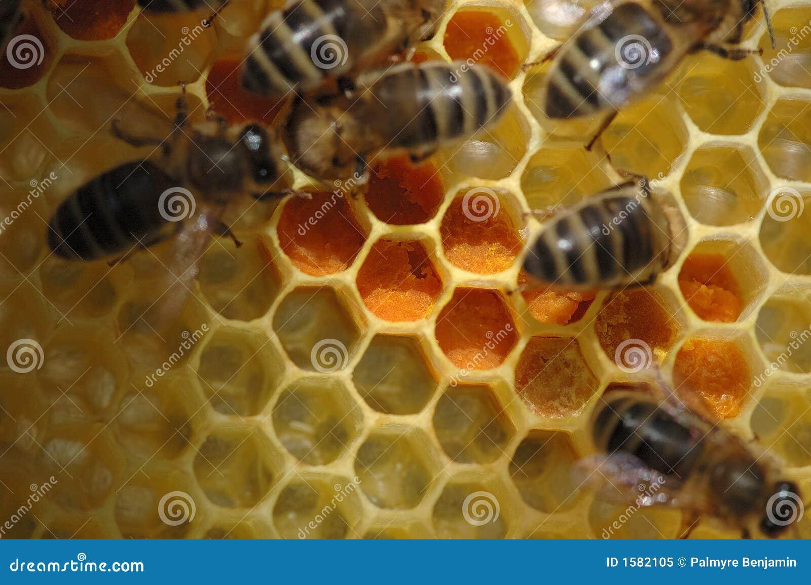 Nid d 39 abeilles avec des abeilles photo libre de droits for Carrelage nid d abeille