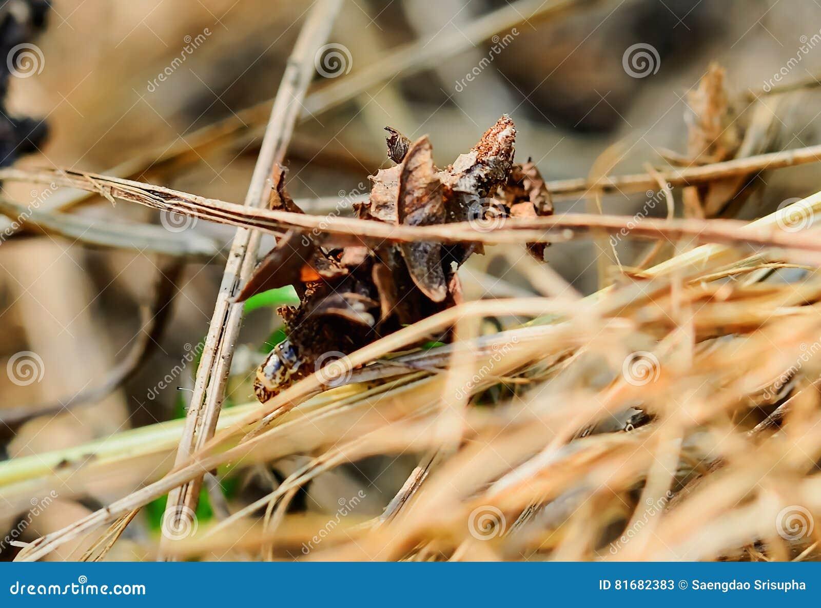 Danr mon nid.,  v. 19. yétois comme un arbre, &c.