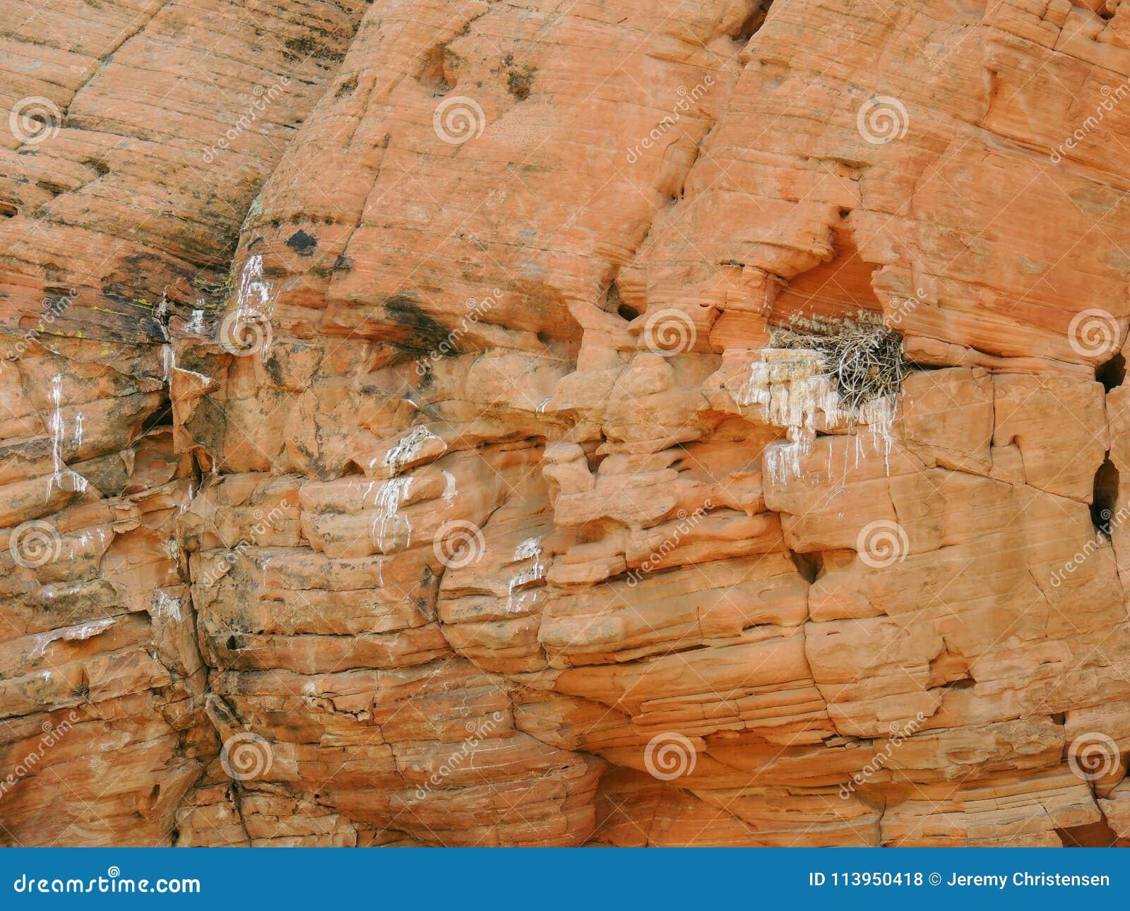 Nid du ` s d oiseau fait dans un défaut en grès et rempli de brindilles et de branches autour de la région nationale de conservat