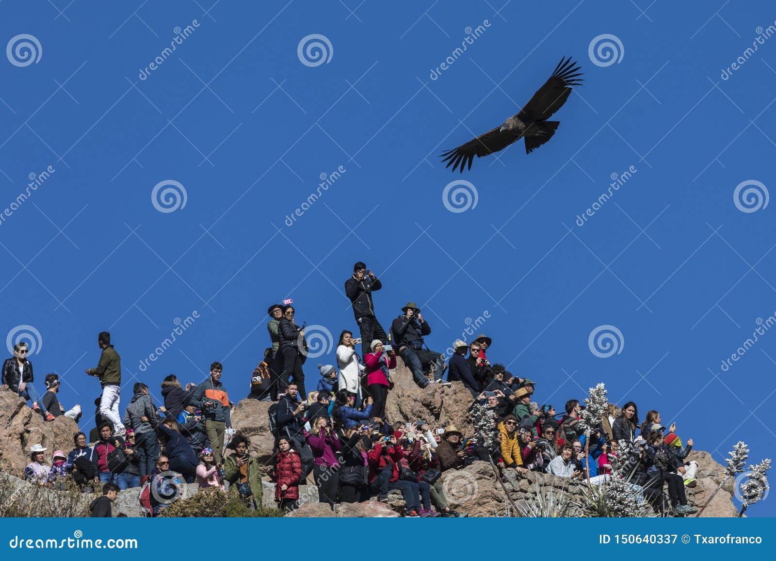 Nieświadomi turyści ignorują kondora który lata nad one w punkt widzenia kondor Peru