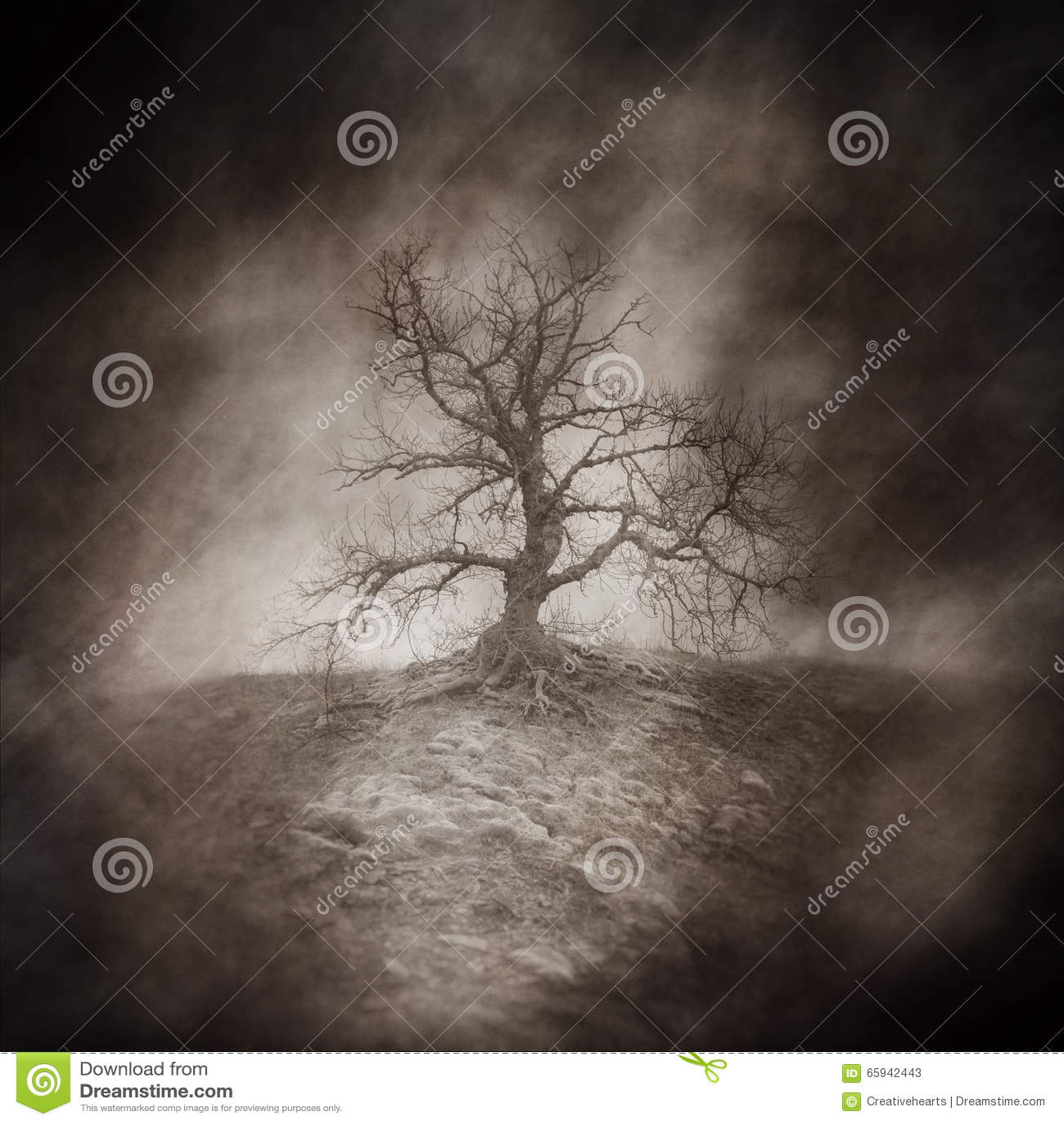 Nieżywy drzewo