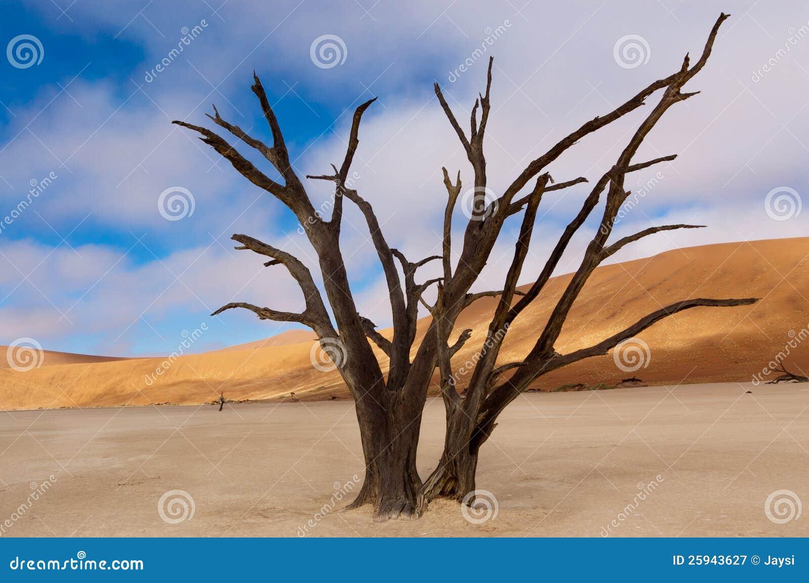 Nieżywy Vlei, Namibia