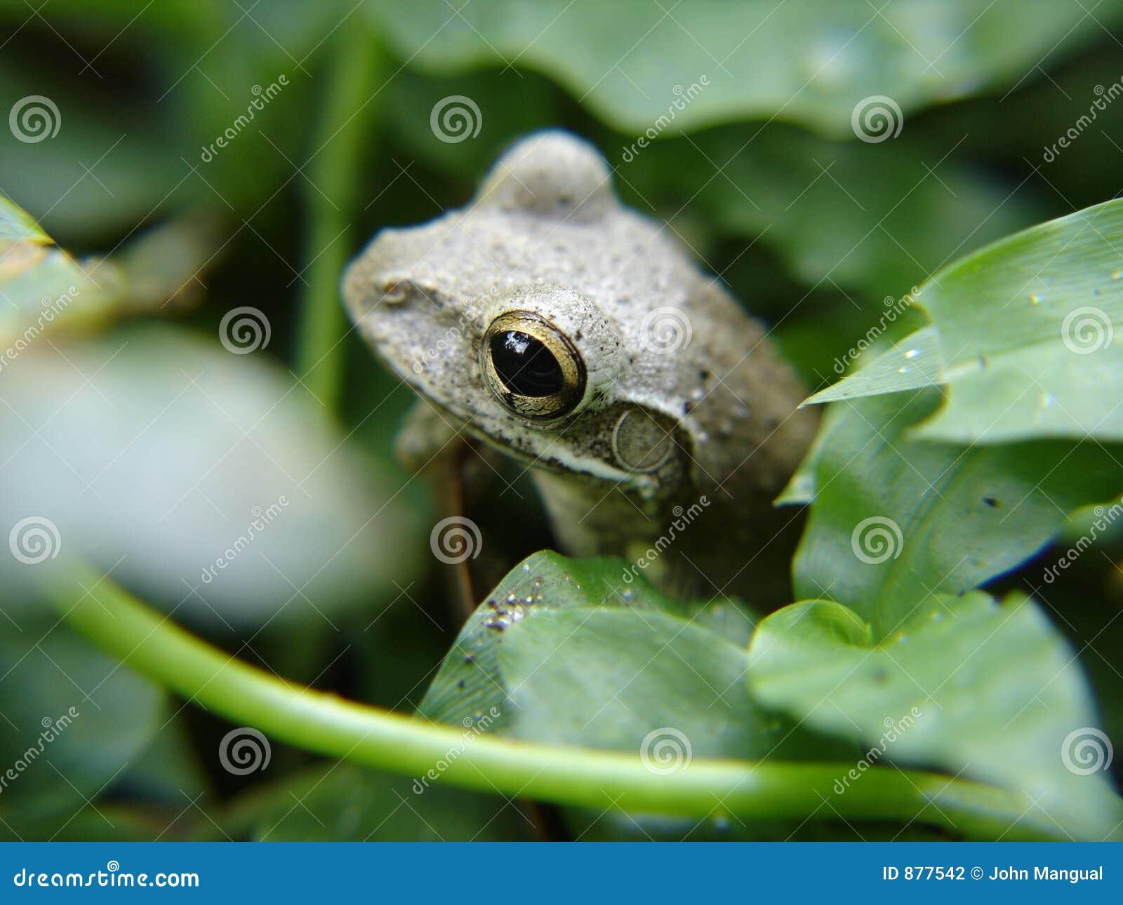 Nie podglądaj miło żaba