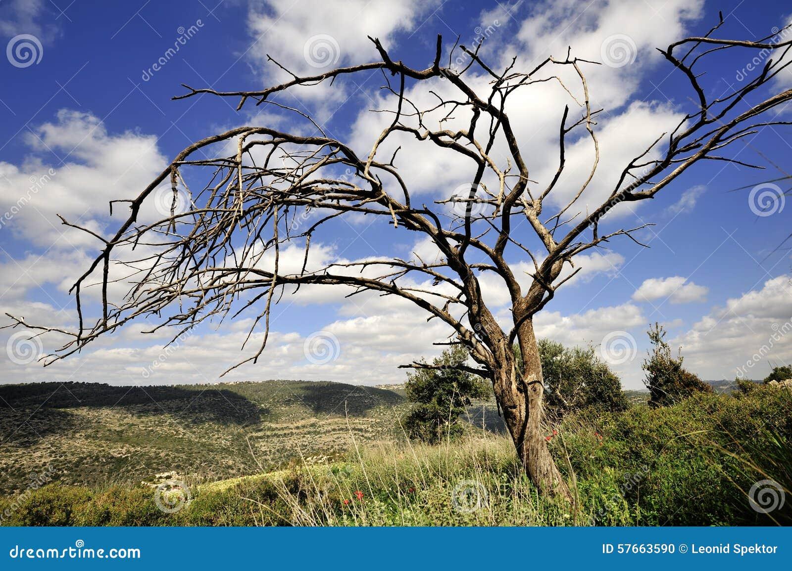 Nieżywy drzewo na nieba tle