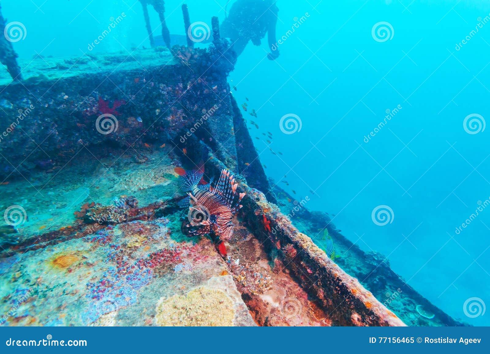 Niebezpieczna lew ryba blisko Shipwreck