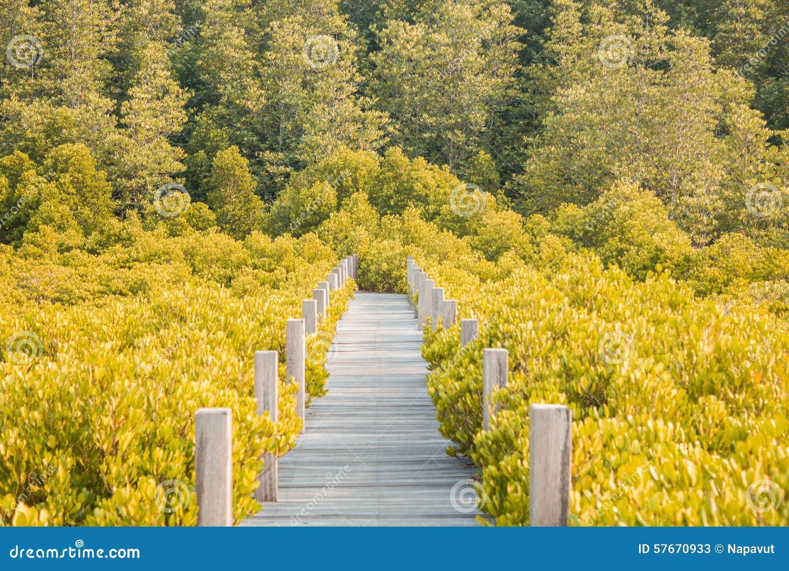 Niebieska spowodowana pola pełne się chmura dzień zielonych roślin krajobrazu ruchu pokaz mały nie niebo było pszenicznym biały w