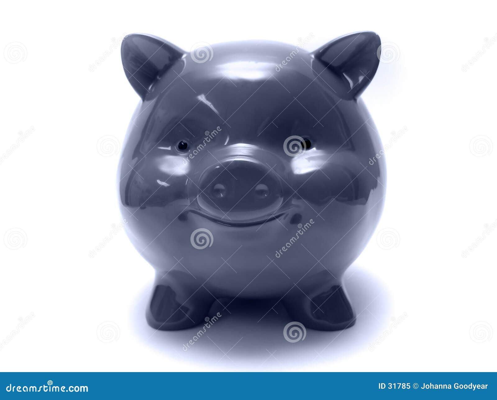 Niebieski świnka