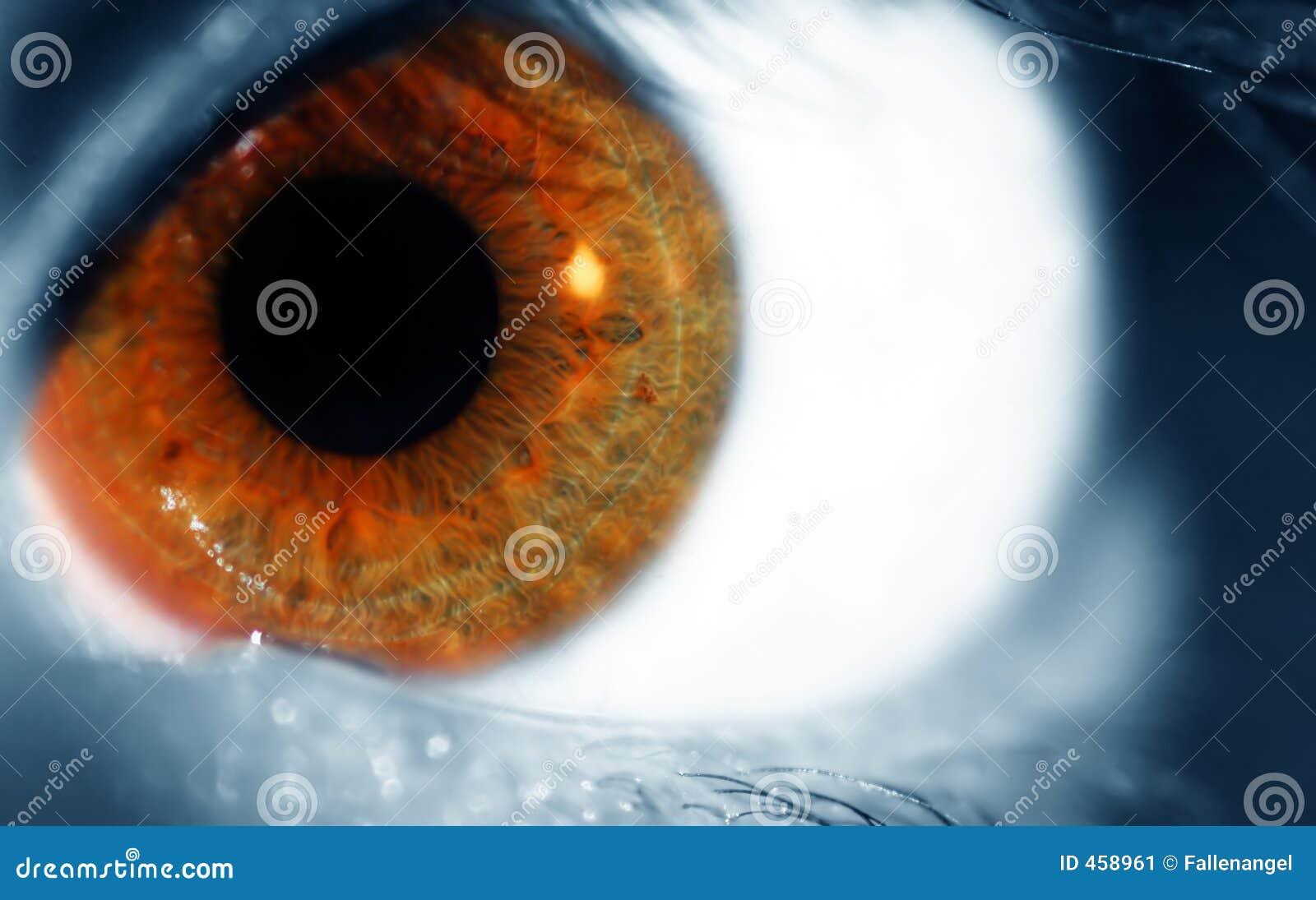 Niebieski brązowe oko