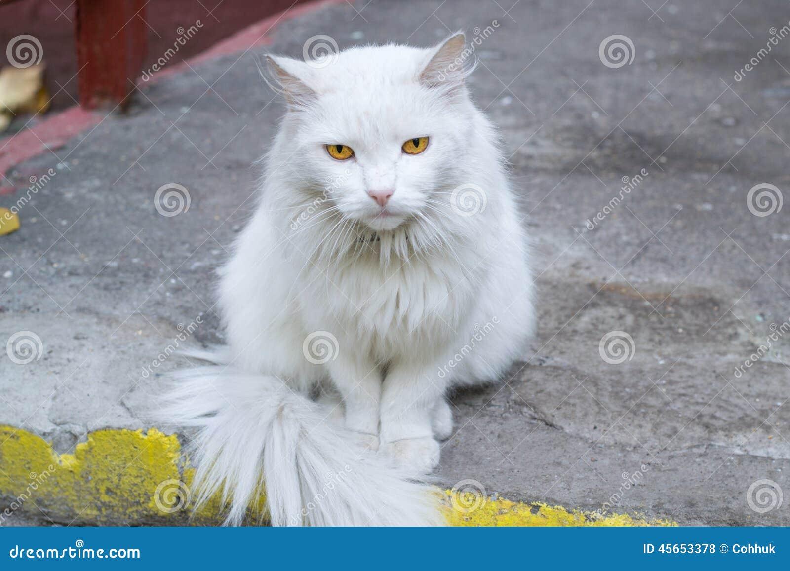 Niebieski Kot Się Zdjęcie Stock Obraz Złożonej Z Błękitny 45653378