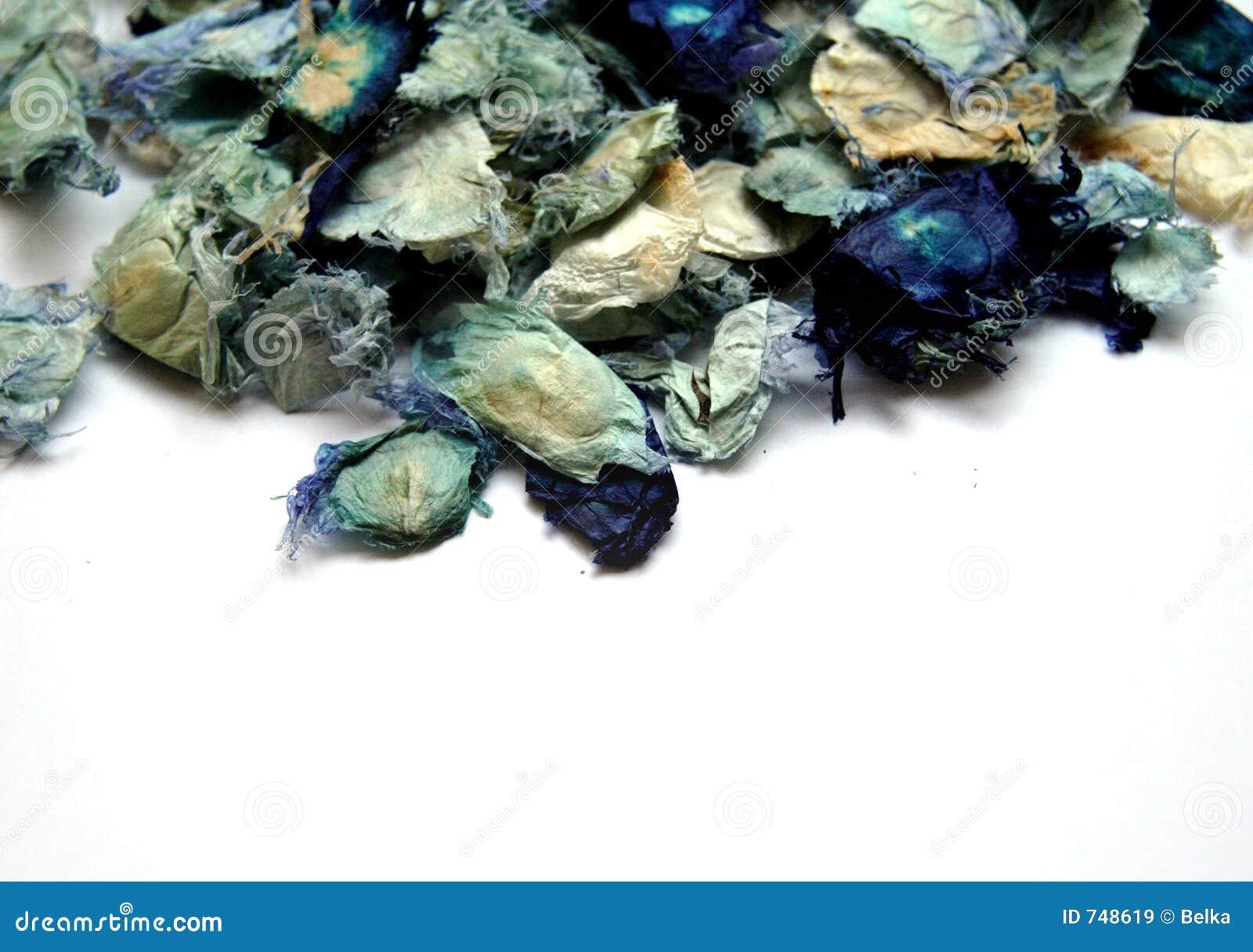 Niebieski potpourri