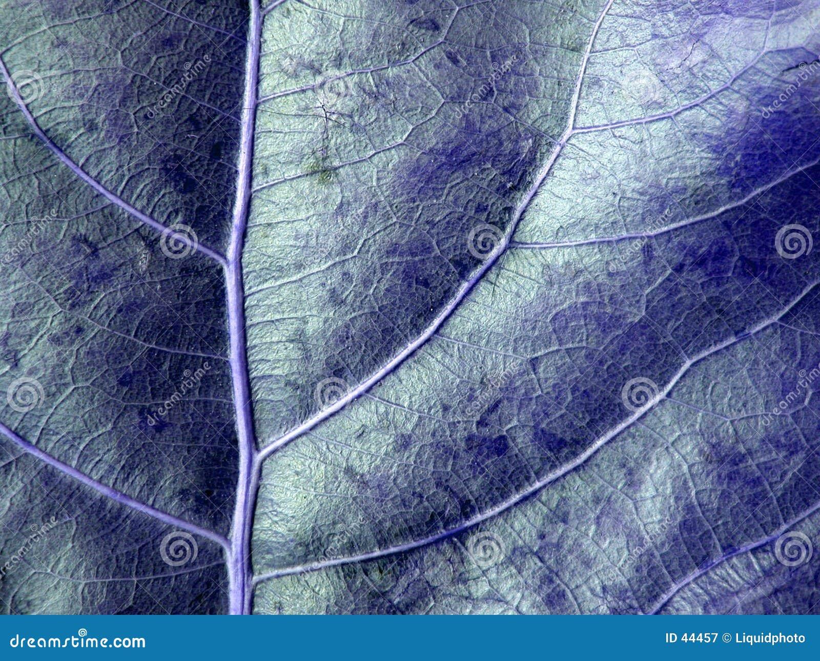 Niebieski tła liścia