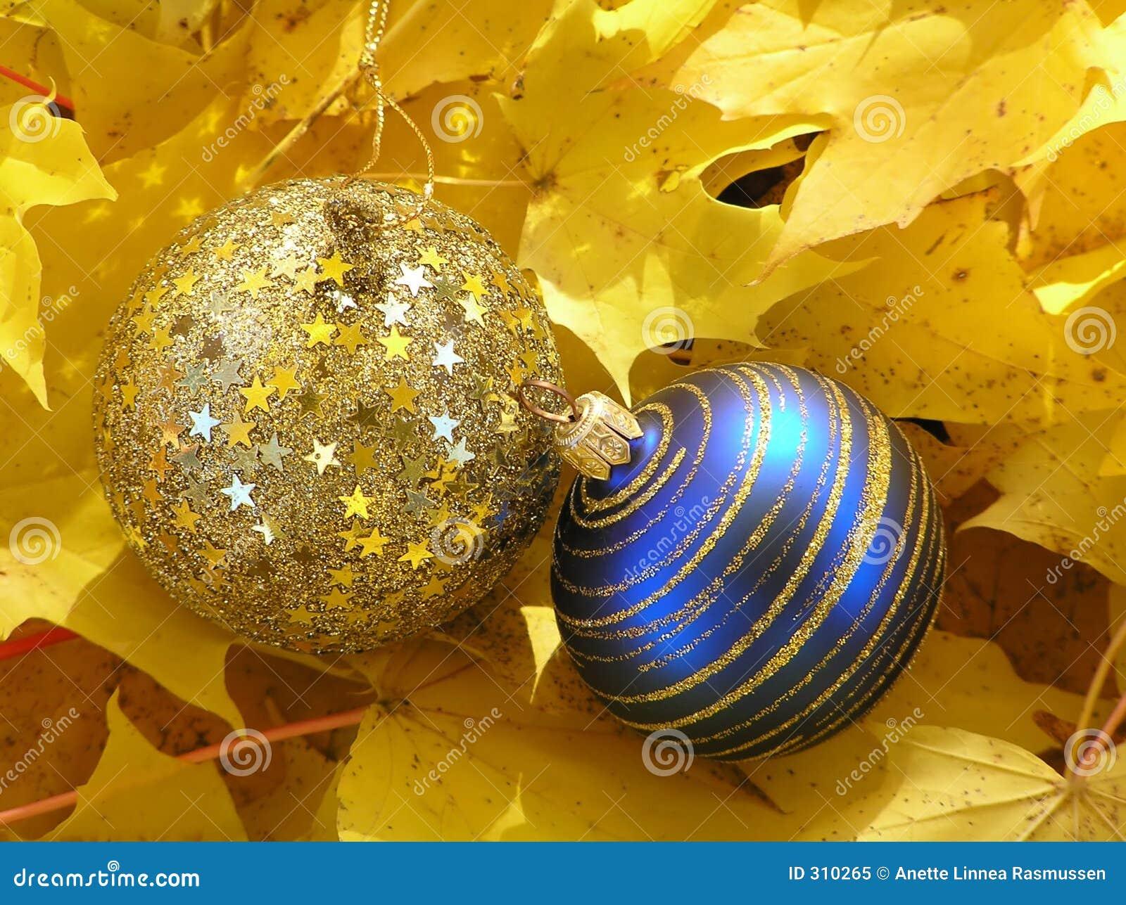 Niebieskie, święta liści złoty klon zaczyna kwitnie