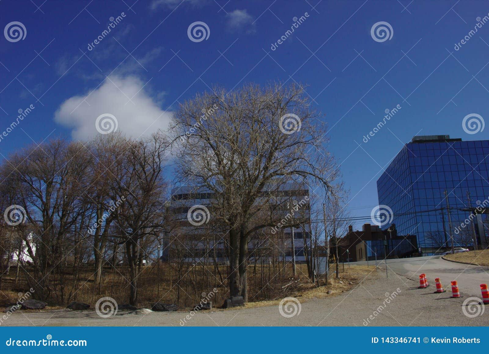 Niebieskie niebo budynki i drzewo