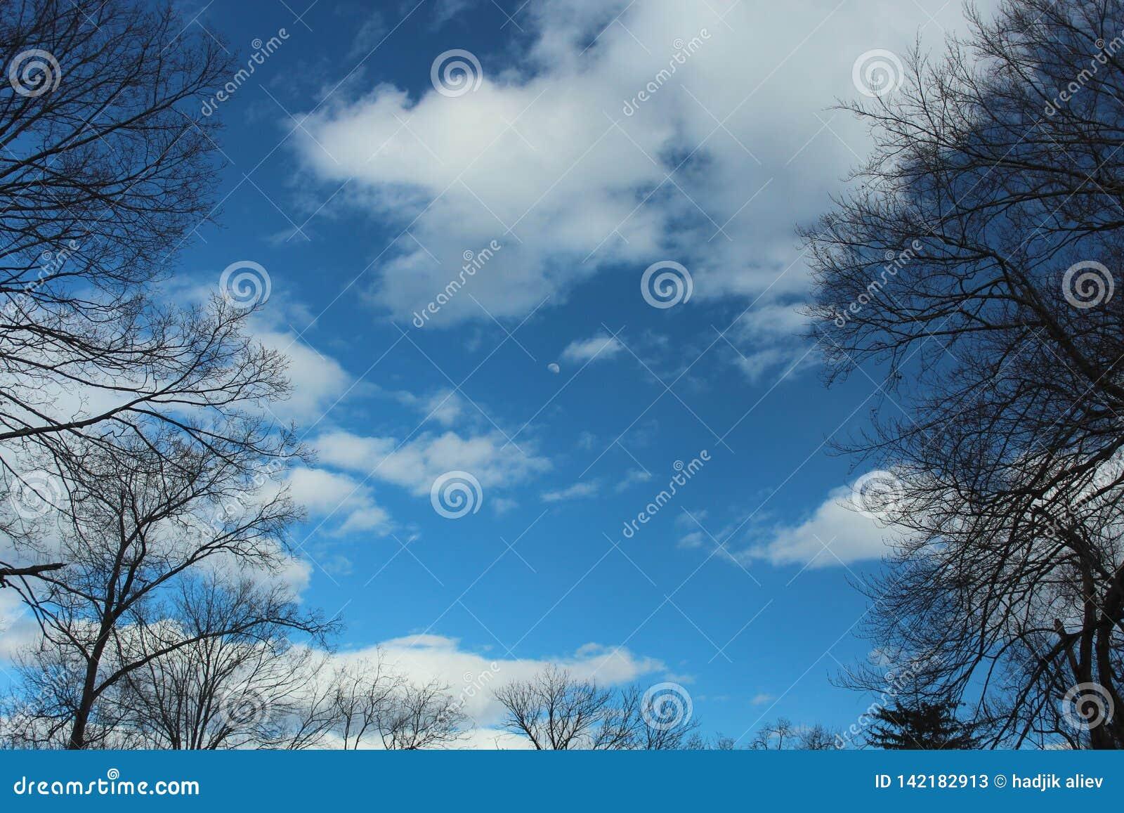 Niebieskie Niebo, chmury i księżyc obramiający wysokimi drzewami,