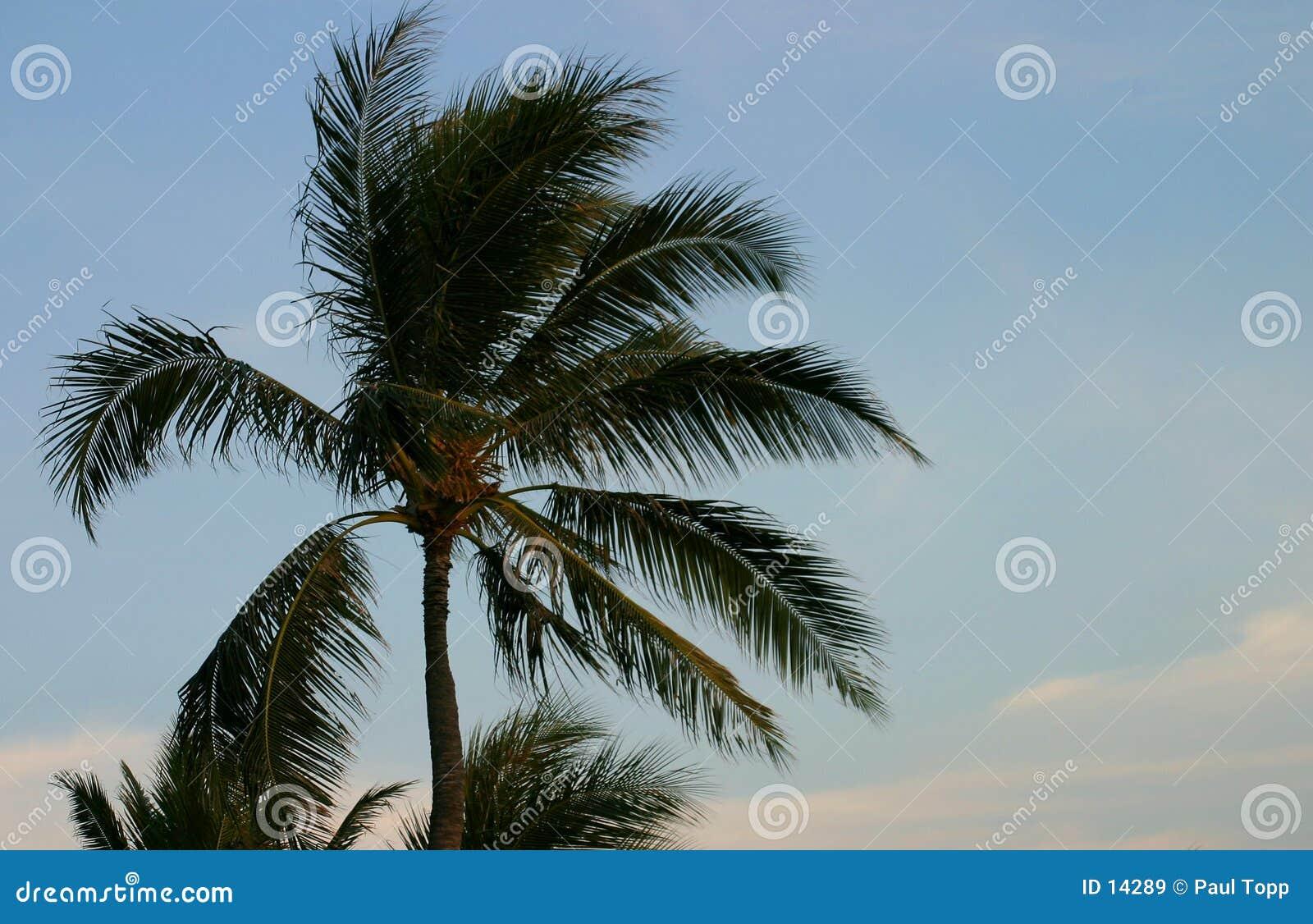 Niebieskie niebo drzewo palm