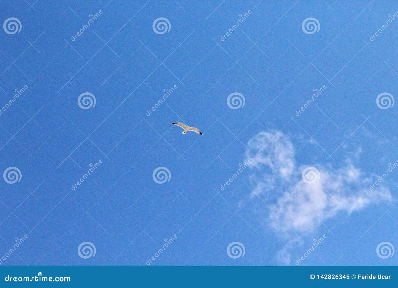 Niebieskie niebo i seagull