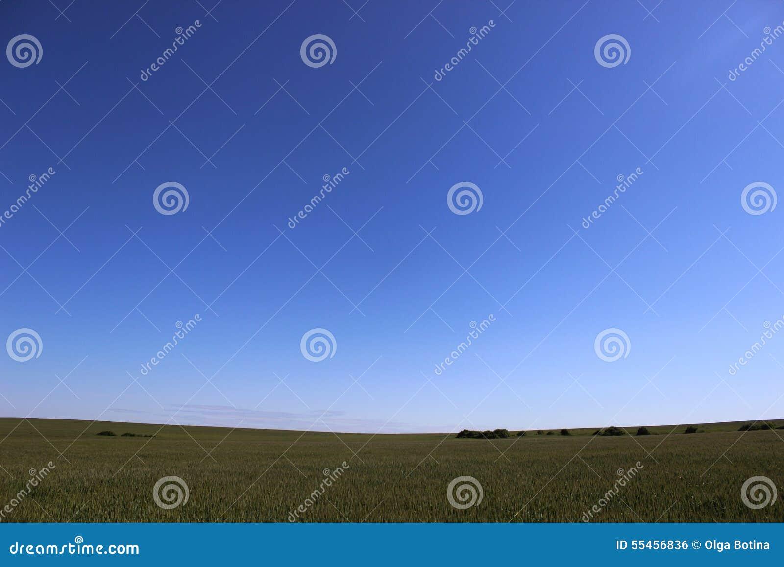 Niebieskie niebo pola