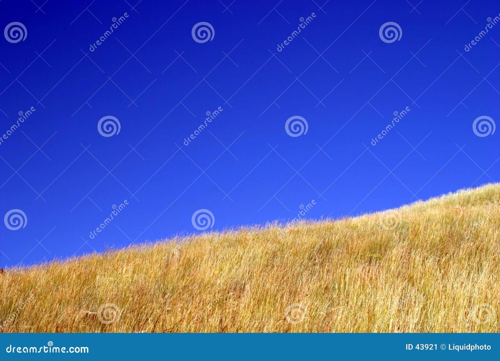 Niebieskie niebo trawy, żółty