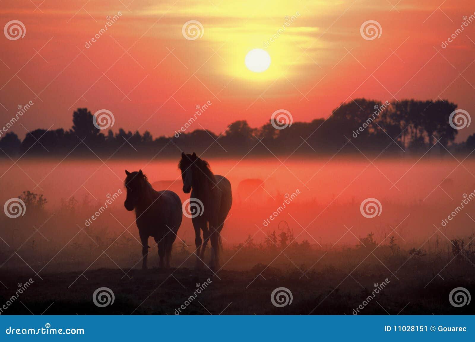 Niebla de la salida del sol de los caballos