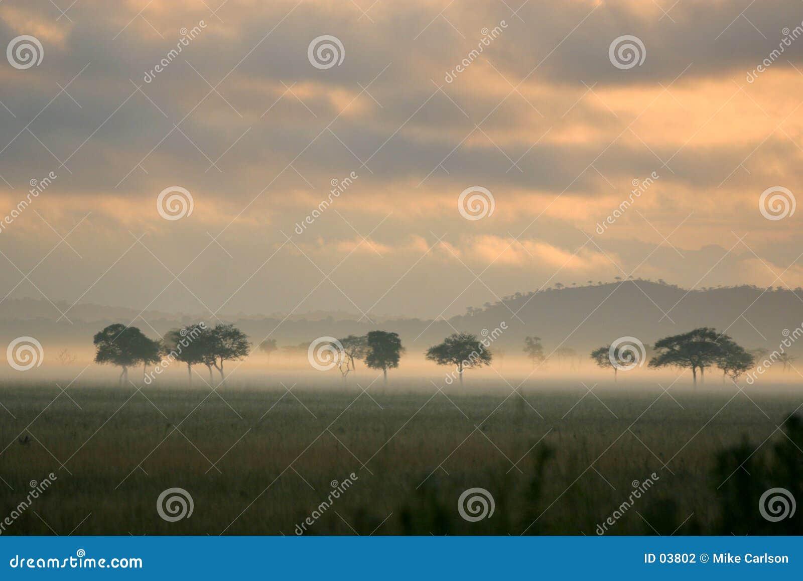 Niebla de la salida del sol en los llanos africanos