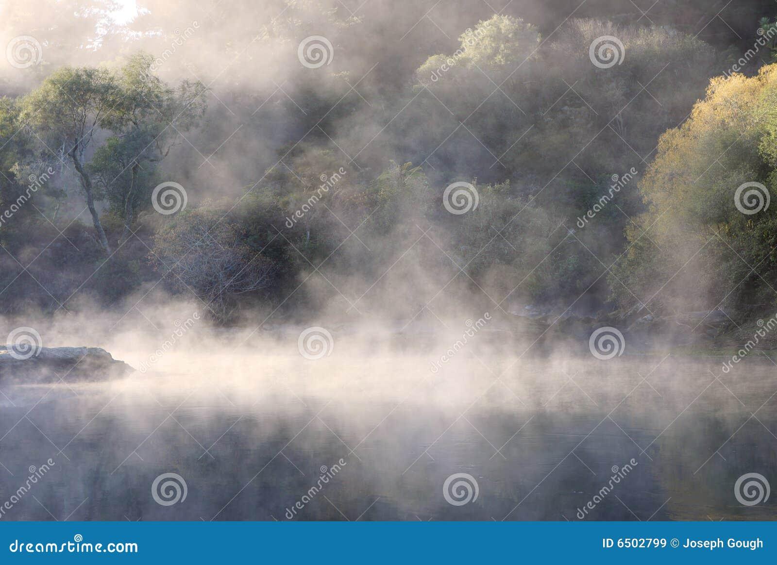 Niebla de la selva tropical