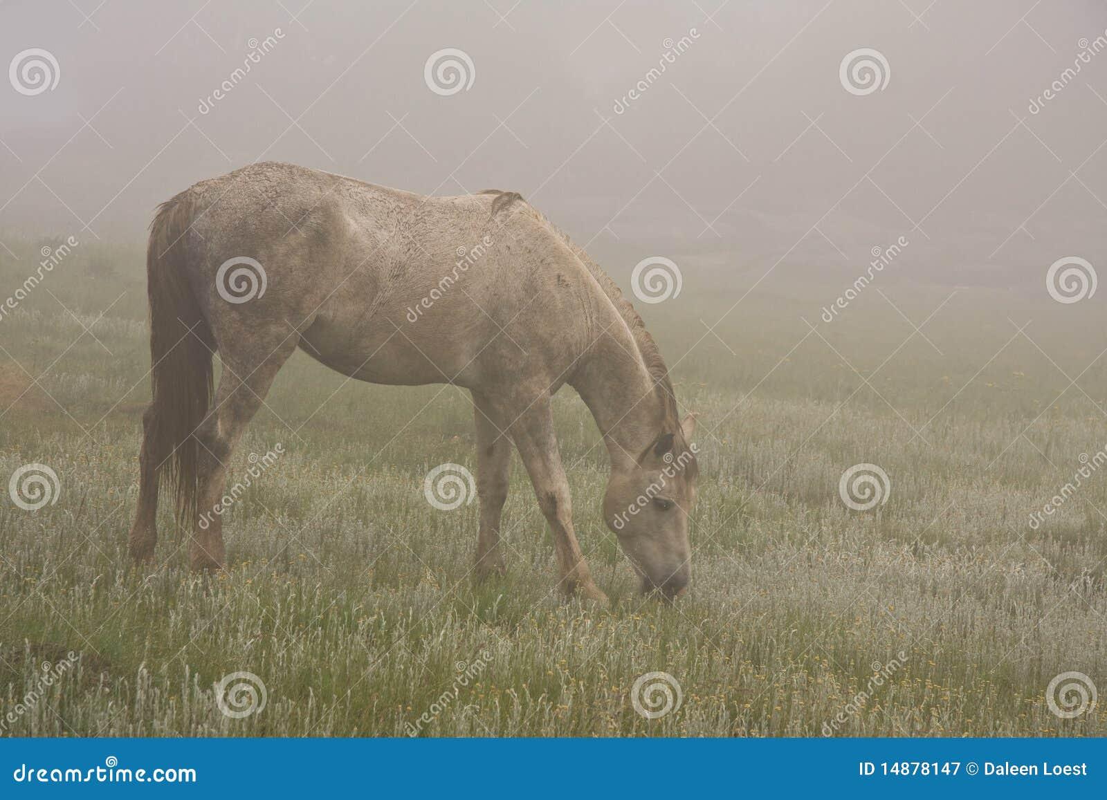 Niebla del caballo salvaje