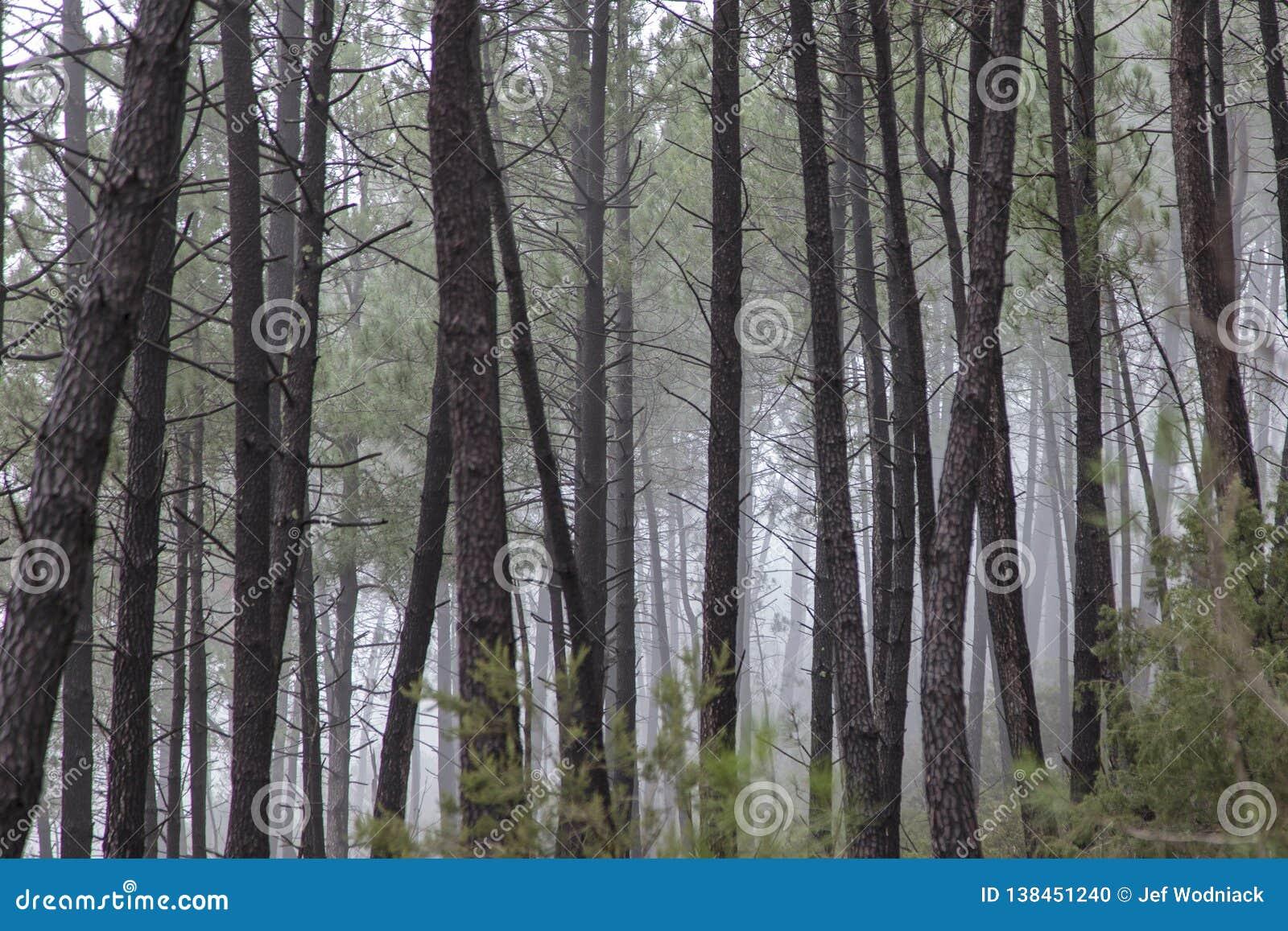 Niebla en el bosque cerca de Saint Jean du Grad