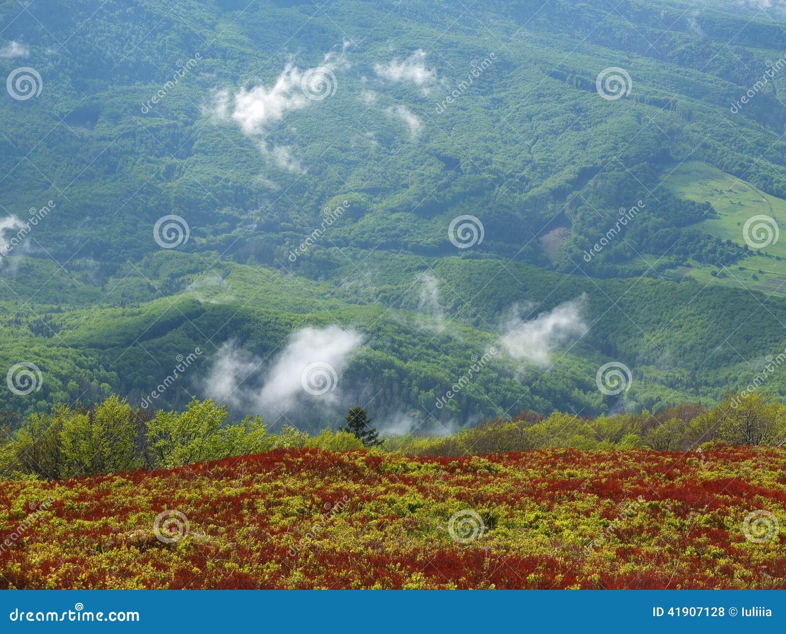 Niebla en las montañas