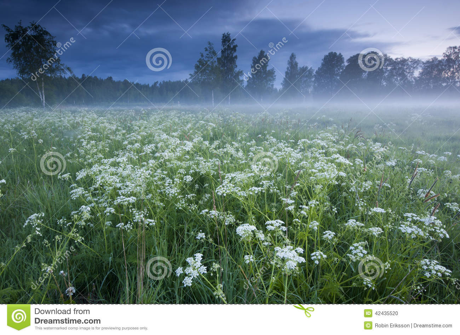 Niebla sobre el prado