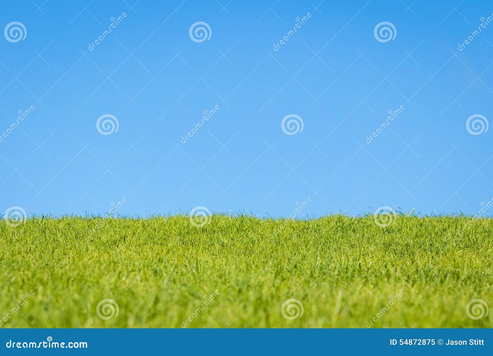Niebo i trawa