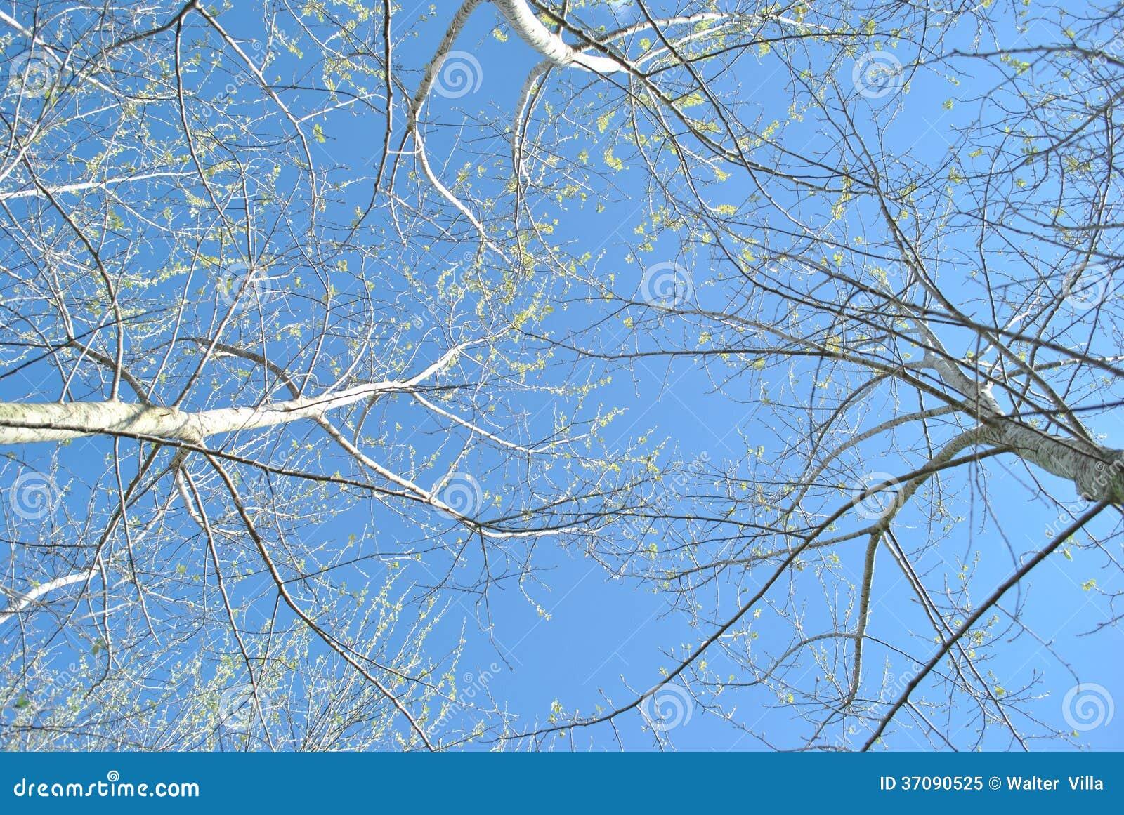 Download Niebo od podłoga obraz stock. Obraz złożonej z woda, śródmieście - 37090525