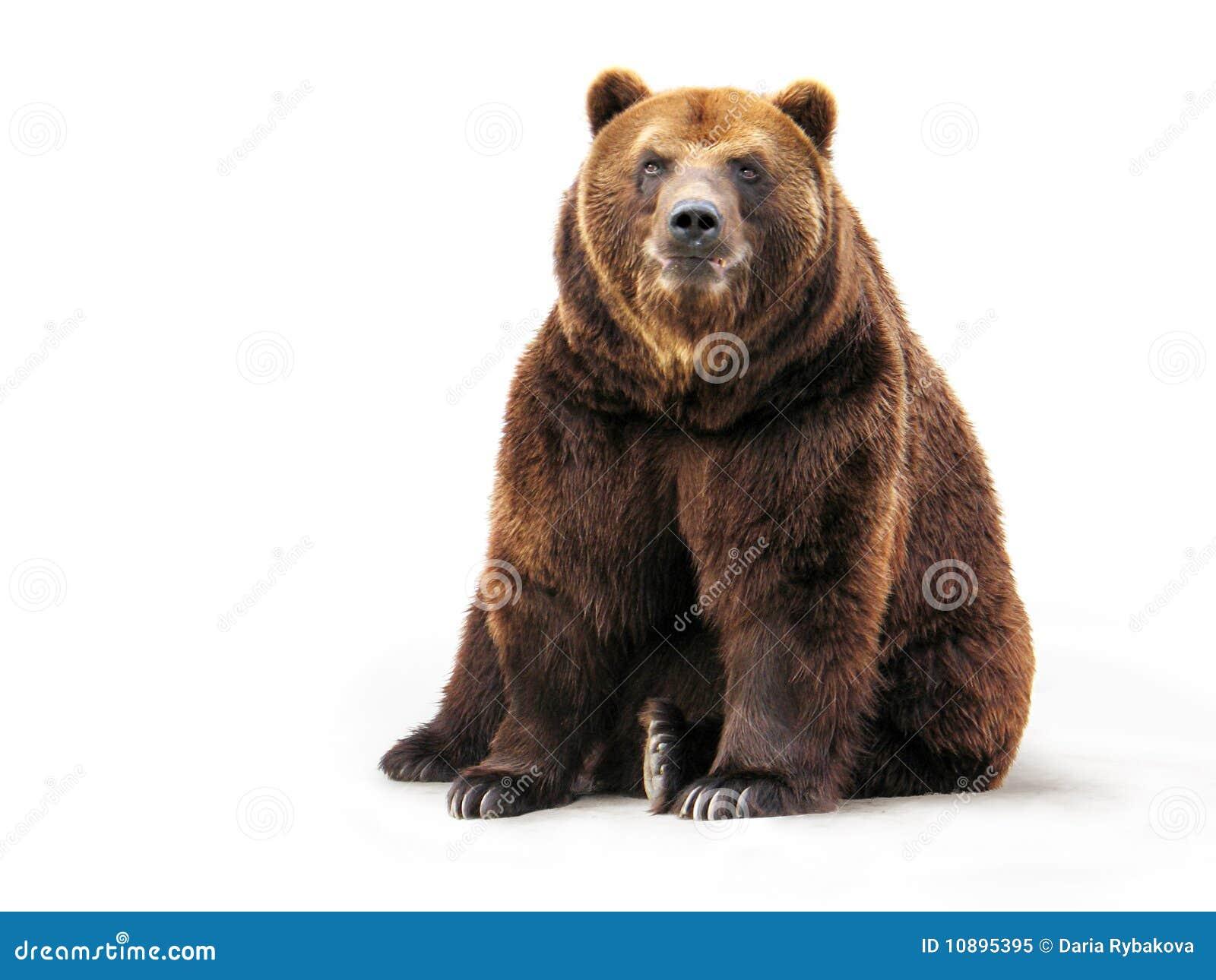 Niedźwiadkowy biel