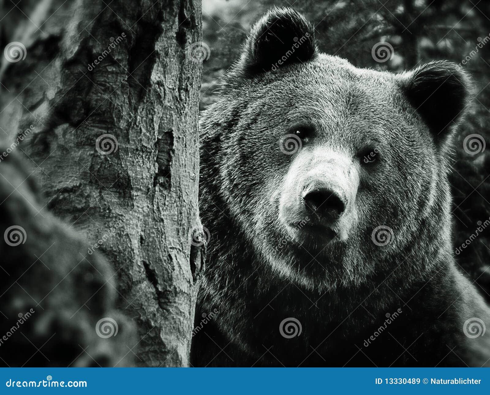 Niedźwiadkowy brąz